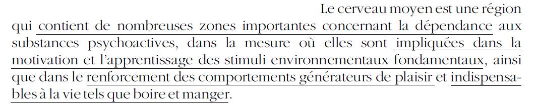 21 - Dépendance - Cerveau moyen - Mésencéphale